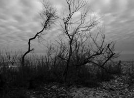 Plage solitude