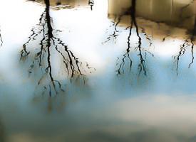 Beauté-des-reflets