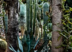 Féerie des plantes