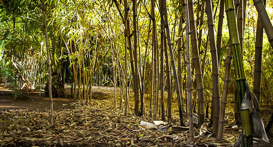 thierry hardy photographe cr ateur la for t de bambous. Black Bedroom Furniture Sets. Home Design Ideas