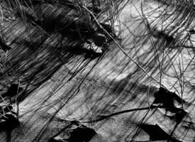 Grains de sable… à l'Espiguette Gard
