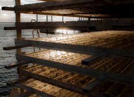 Bouzigues, plaques à huîtres