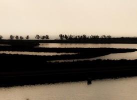 Beauté des marais