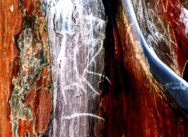 Pictural la Grotte