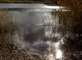 Reflets du Salagou