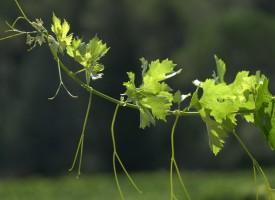 Danse des feuilles