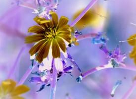 Féerique flower