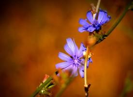 La fleur et l'abeille