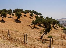 Le Jardin des oliviers FES