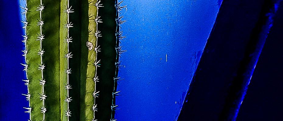 Le cactus de Majorelle