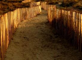 Dunes de Carnon