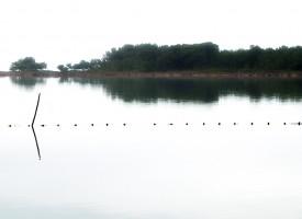 Bord de l'étang des Aresquiers