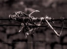 Crochet de vigne