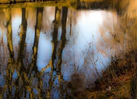 Reflet du Canal d'Agde