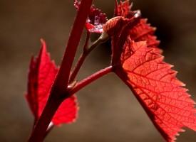 Beauté du rouge